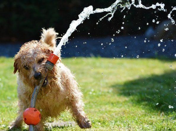 シャッタースピードのフリーズモーション犬