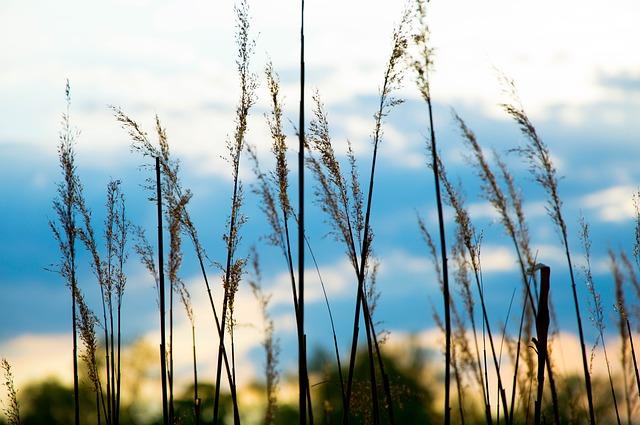 被写界深度の草