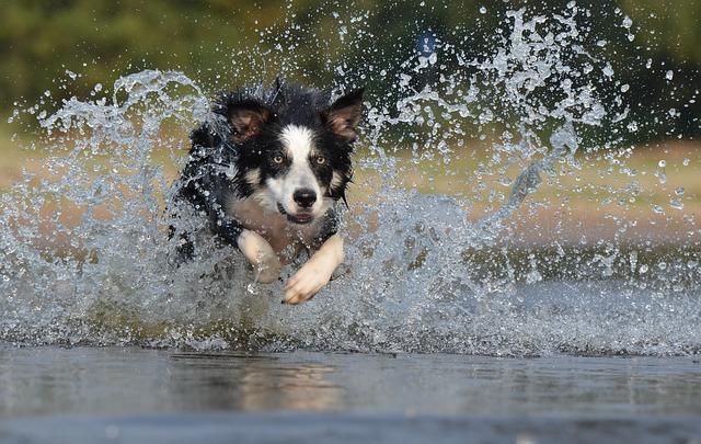 シャッタースピード犬